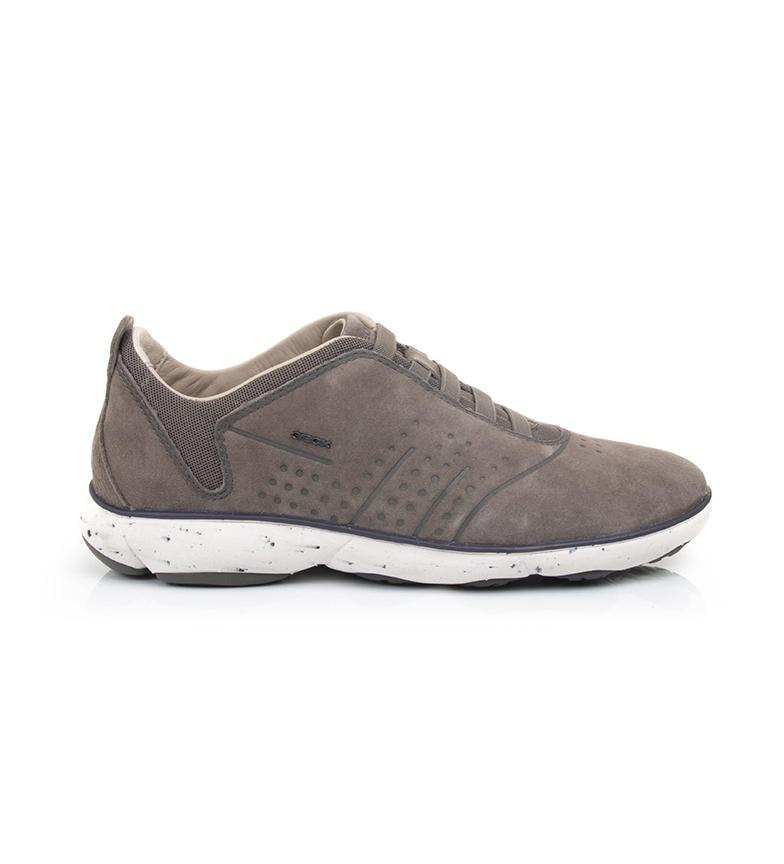 Comprar GEOX Sapatos Nebulosa castanha